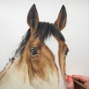 Drawing Animals in Coloured Pencils (children's workshop) 4