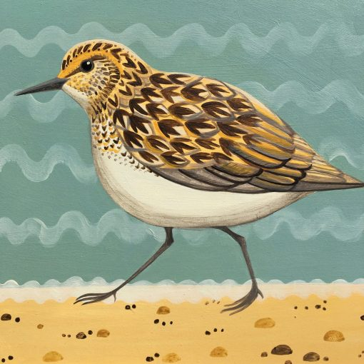 Serious Sanderling, Oil on Board 1