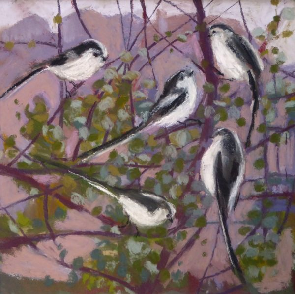 Long Tailed Tits in the Muehlenbeckia 1