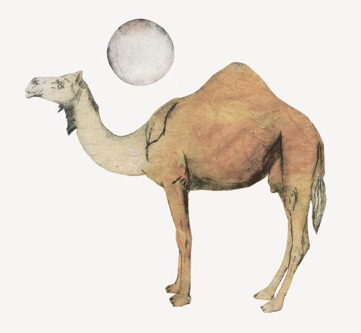 Beatrice Forshall, Camel 1