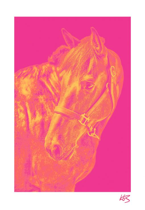 Kos Evans, Pop Horse I 1